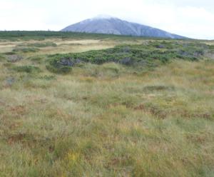 Historia antropocenu zapisana w górskim torfowisku
